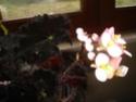 Début des floraisons Dsc01310
