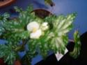 Début des floraisons Dsc01311
