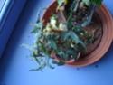 Début des floraisons Dsc01312