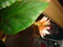 Début des floraisons Dsc01319