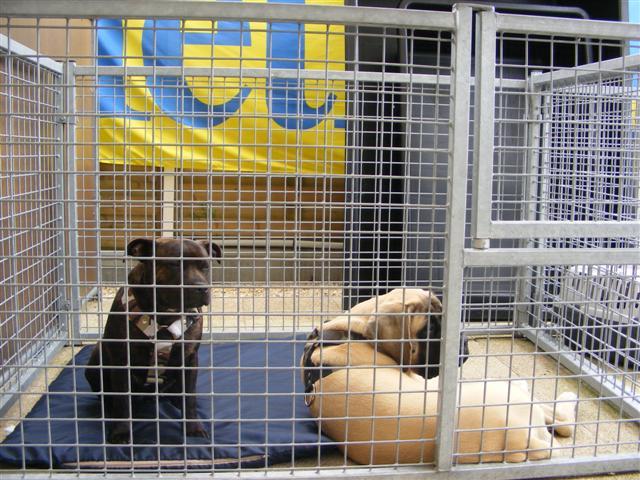 Photos de la porte ouverte à POINT DOG hier !!!! Photo_17