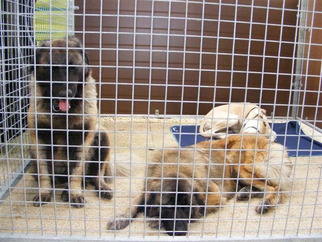 Photos de la porte ouverte à POINT DOG hier !!!! Photo_18