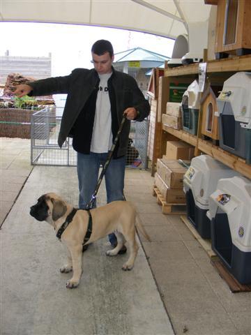 Photos de la porte ouverte à POINT DOG hier !!!! Photo_20