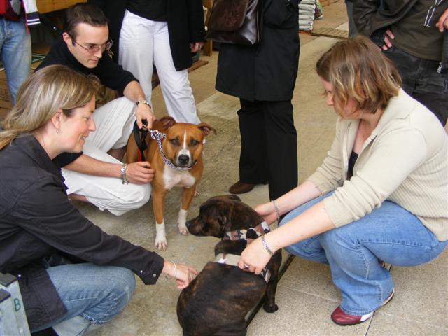 Photos de la porte ouverte à POINT DOG hier !!!! Photo_22