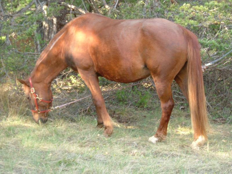 Le 2ème mini Ciaràn en route 2007-026