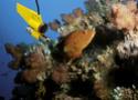 Le Monde de Carpillon: Capitaine Speci30 111
