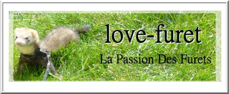 love-furet