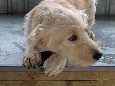 connaissez vus un chien chasseur à l'adoption près du 37 ? Griffo10