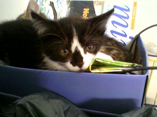 3 chatons (Kiyo, Leïla et Malo) Photo-44