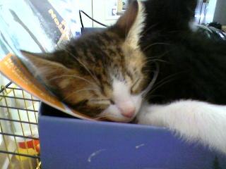 3 chatons (Kiyo, Leïla et Malo) Photo-45