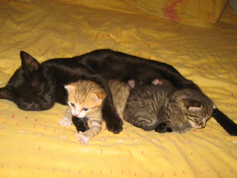 Nausicaa et ses bébés Photos10
