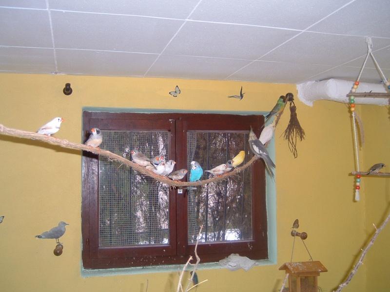 semi liberté pour mes oiseaux Dscf0013
