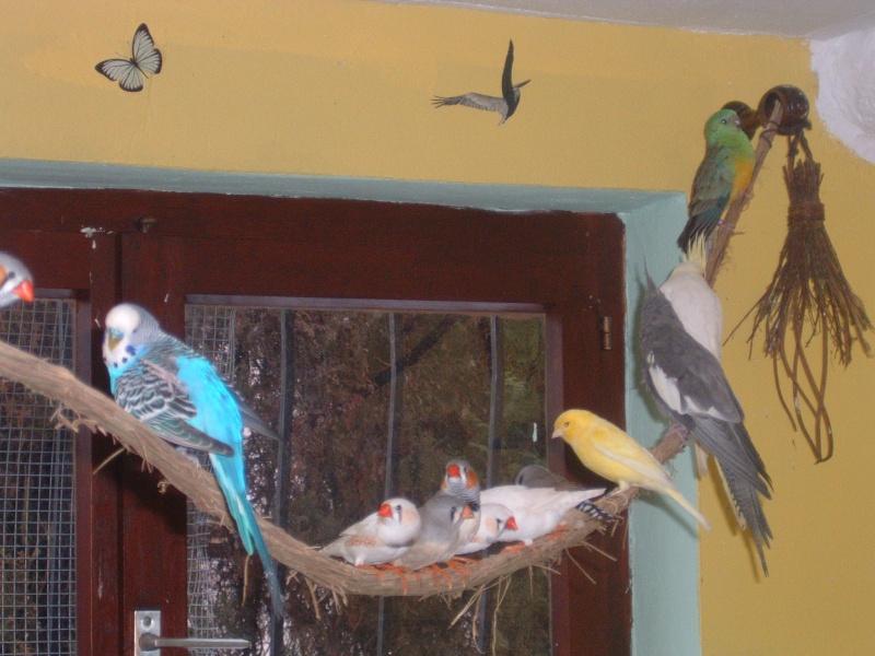 semi liberté pour mes oiseaux Dscf0014