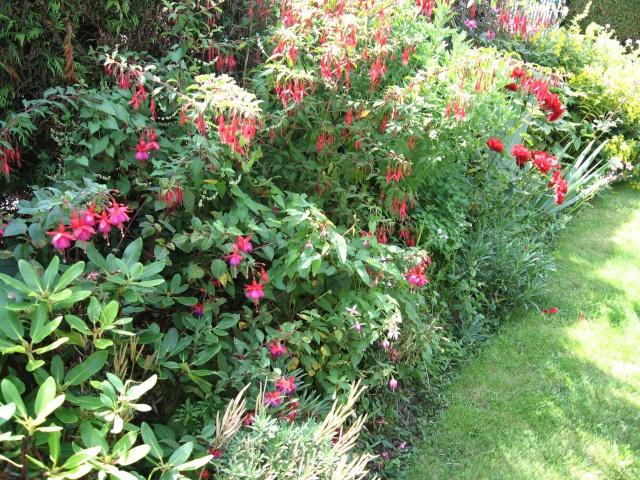 jardins et massifs de vivaces Vue_am11
