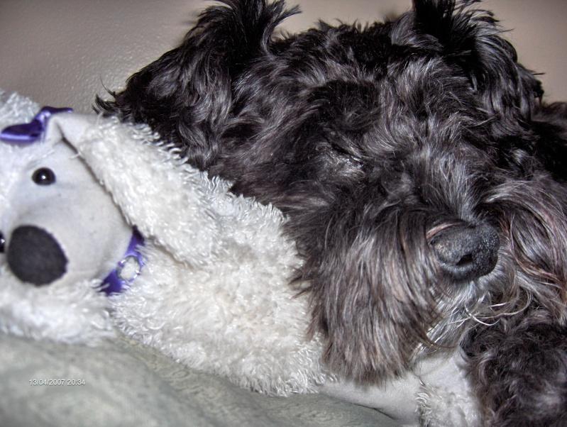 Besoin d'info sur symptômes et test d'allergie pour chien Les_be33