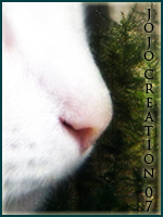 .Jojo creation 08. Avlune10