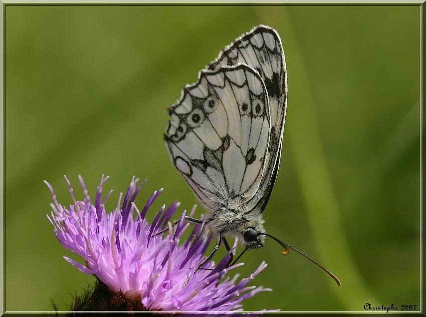 Petite série Papill10