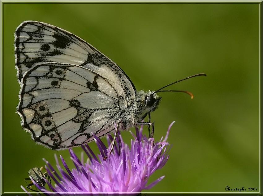 Petite série Papill12