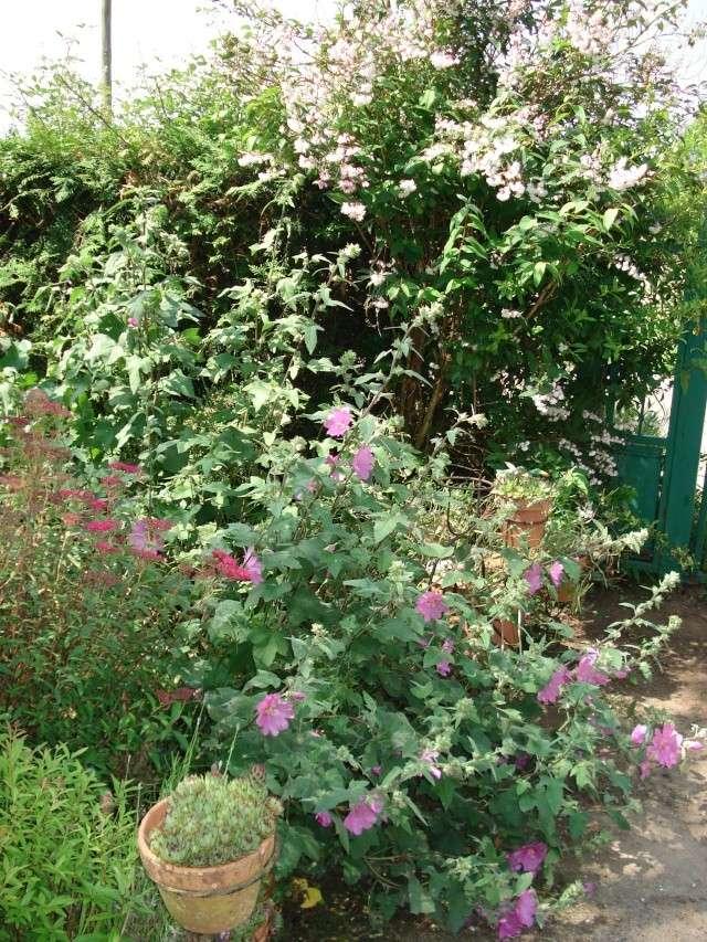le jardin de Giroflee - Page 2 5_juin13