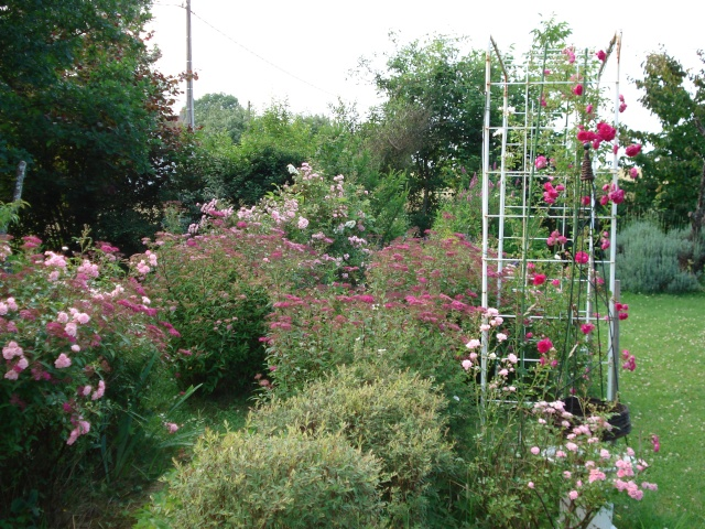 le jardin de Giroflee - Page 2 Jardin29