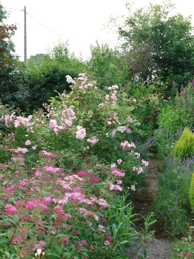 le jardin de Giroflee - Page 2 Jardin35