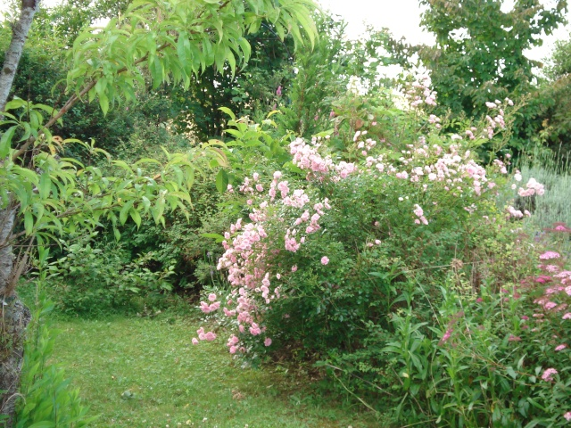 le jardin de Giroflee - Page 2 Jardin39