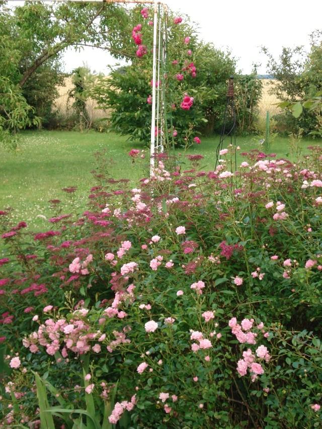 le jardin de Giroflee - Page 2 Jardin40