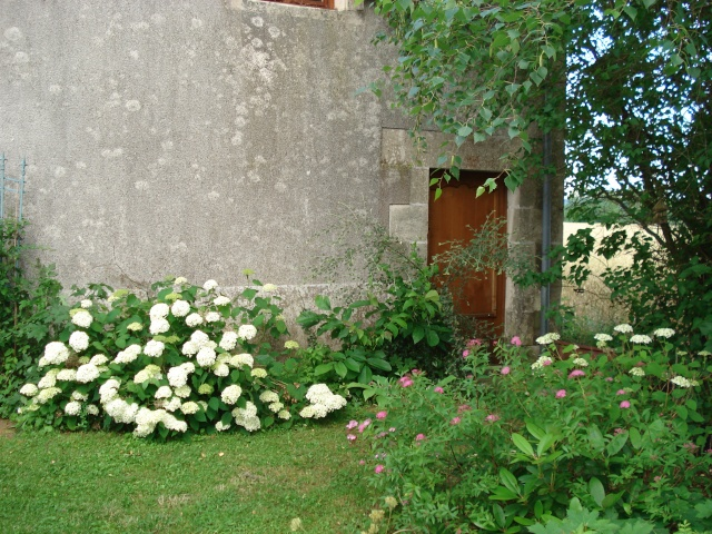 le jardin de Giroflee - Page 2 Jardin41