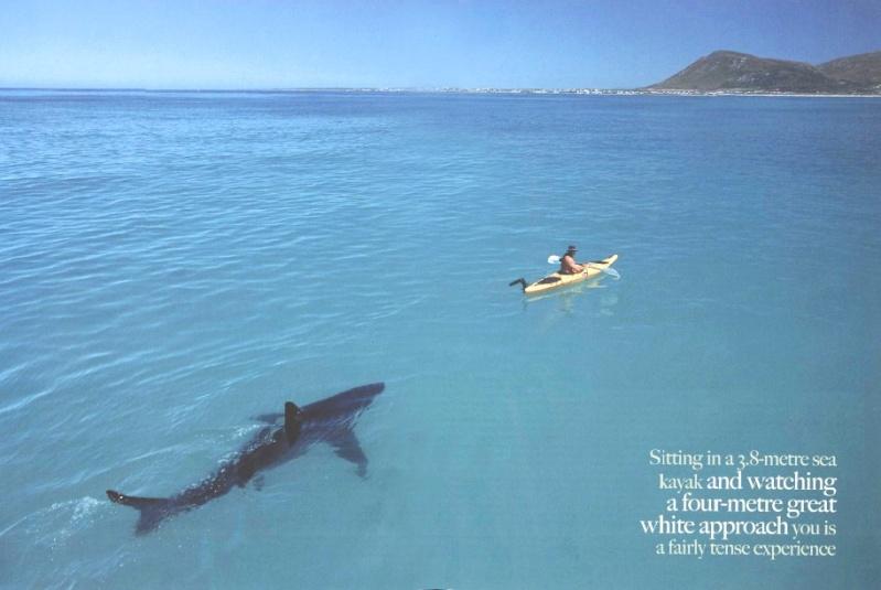 Sauter du 10m. Shark-10