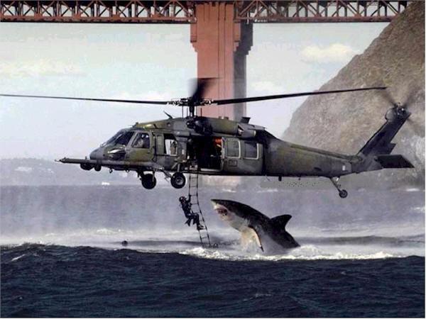 Sauter du 10m. Shark210
