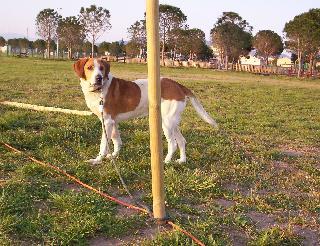 DRUIDE,_chien_sauvé_in_extremis cherche une famille 802szy10