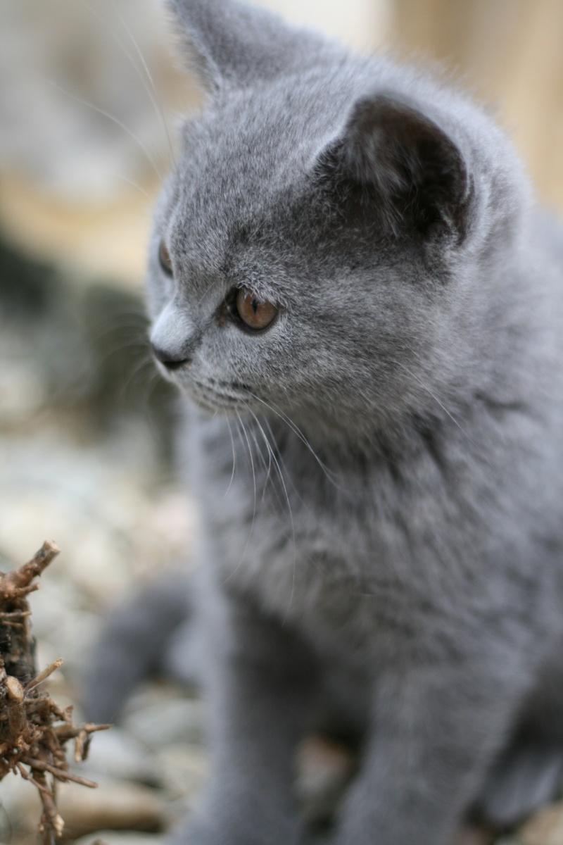 Les petits chatons de mon Aurore Photo_10