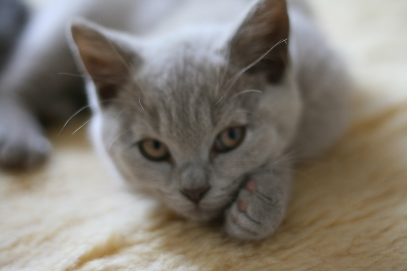 Les petits chatons de mon Aurore Photo_12