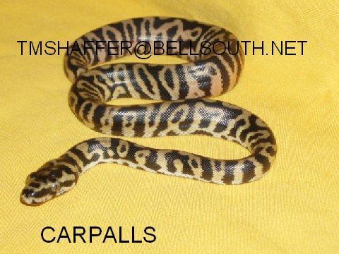 CARPBALL !!! Carpal11