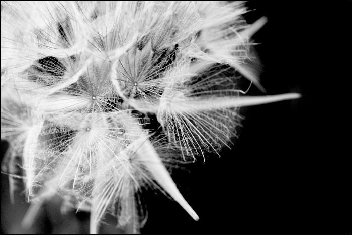 Feu d'artifice floral Floral13