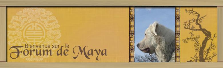 le forum de Maya