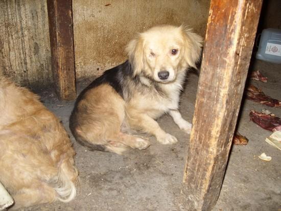 URGENT chiennes qui ont besoins de soins (ASSO. FA) 210
