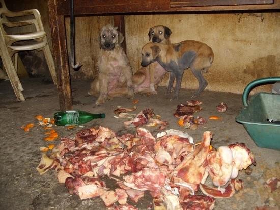 URGENT chiennes qui ont besoins de soins (ASSO. FA) 410