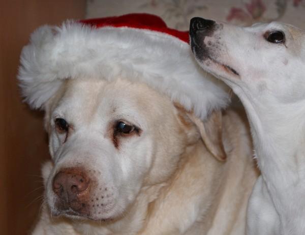BELLE fête son année chez Cani-Nursing (29 décembre 2009) Avec-d10