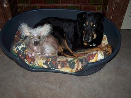 MAX et son p'tit plumeau (4 décembre 2009) Avec-t10