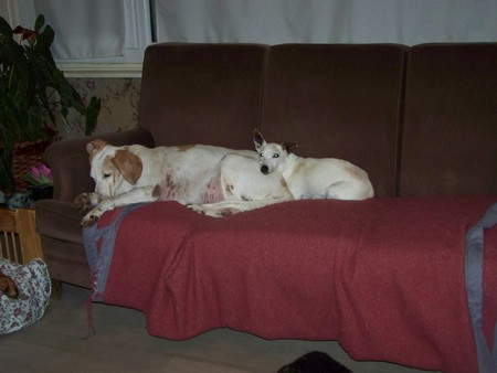 Confort (14 décembre 2009) Di-ca10