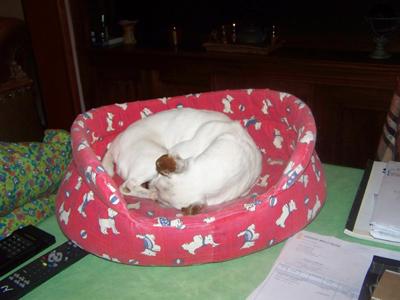DIVINE aime la hauteur (8 décembre 2009) Di-pan11