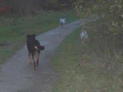 1ère promenade en liberté (7 décembre 2009) Ma-lac10