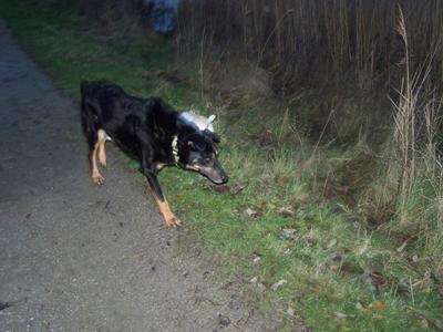 1ère promenade en liberté (7 décembre 2009) Ma-lac11