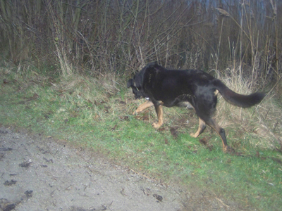 1ère promenade en liberté (7 décembre 2009) Ma-lac12