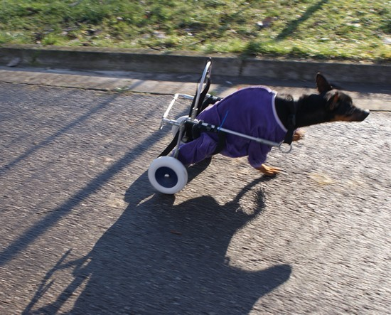 Promenade en chariot (3 janvier 2010) Mag-ch21