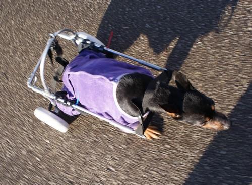 Promenade en chariot (3 janvier 2010) Mag-ch22