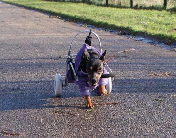 Promenade en chariot (3 janvier 2010) Mag-ch28