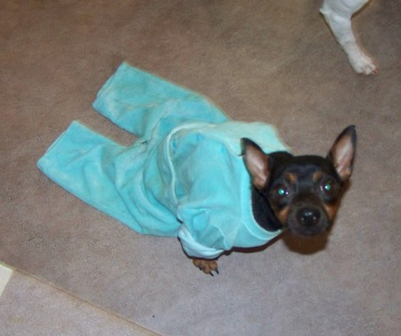 Visite vétérinaire (12 décembre 2009) Mag-py10