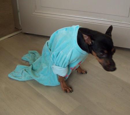 Visite vétérinaire (12 décembre 2009) Mag-py11